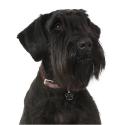 Belcando Adult Active croquette pour chien