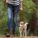 Ownat Maxima Grain Free Junior croquette pour chien
