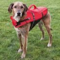 Nutribound complément nutritionnel pour chiens en recuperación