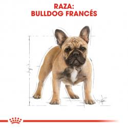 Royal Canin-Bouledogue Français Adulte (1)