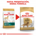 Royal Canin-Golden Retriver Adulte (1)