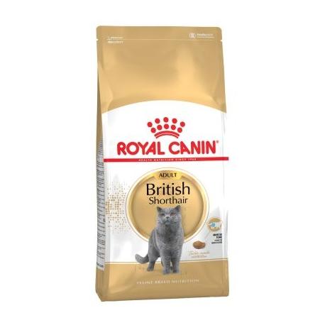 Royal Canin-British Shorthair Adulte (1)